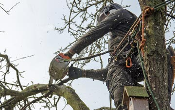 the process of removing dead wood from Berkhamsted trees