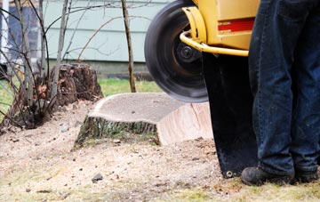 rated Berkhamsted tree stump removal companies