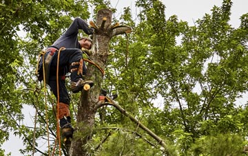 tree surgeon Berkhamsted, Hertfordshire