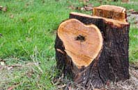 free Berkhamsted tree stump removal quotes